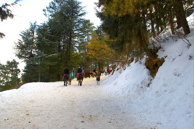 Kufri Snow Point Near Shimla For Tourist Horse Ride And
