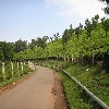Coonoor tea garden picture gallery