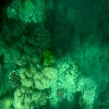 Sea corals of Andaman