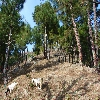Khajjiar To Chamba trekking
