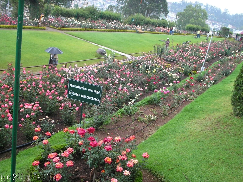 Go2india In Roses Inside Ooty Rose Garden
