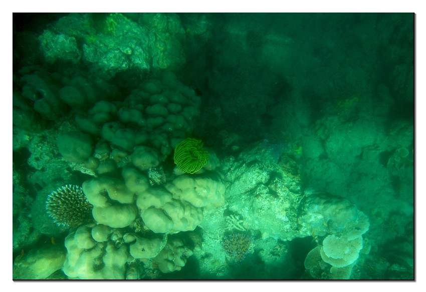 Sea corals at Havelock beach of Andaman