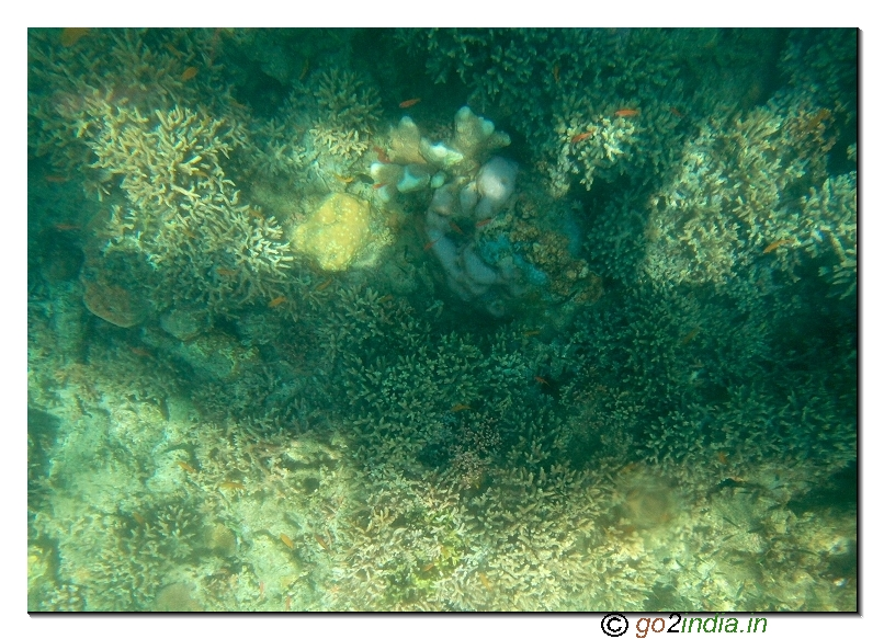 Under water coral view through glass boat in Jolly buoy island of Andaman