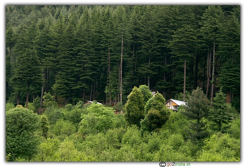 House surrounded by deodar tree at Khaknal, Manali Naggar road