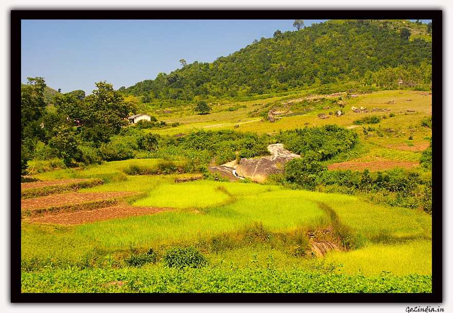 Terrace farming at the valleys for Terrace farming in india