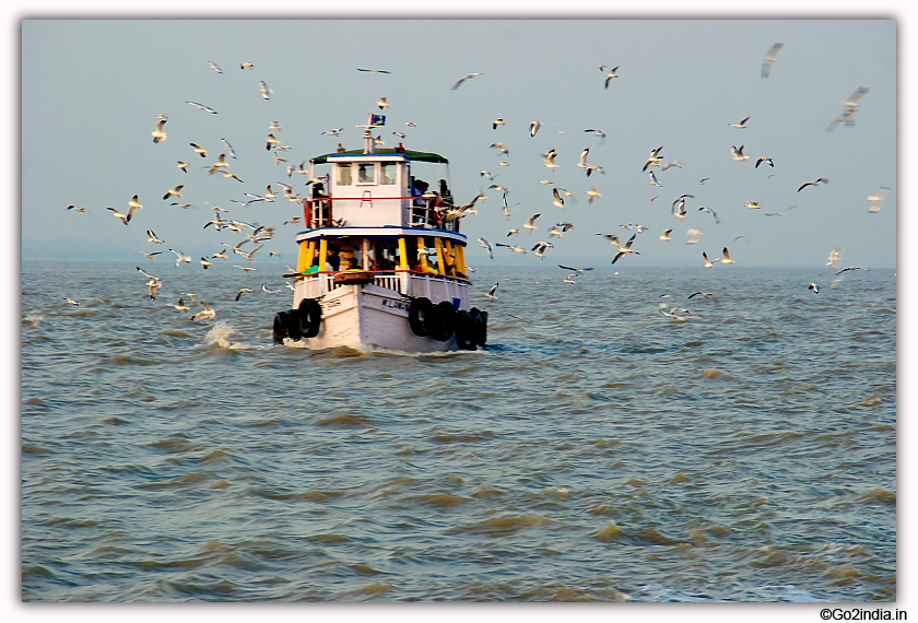 Elephanta Caves boats and birds